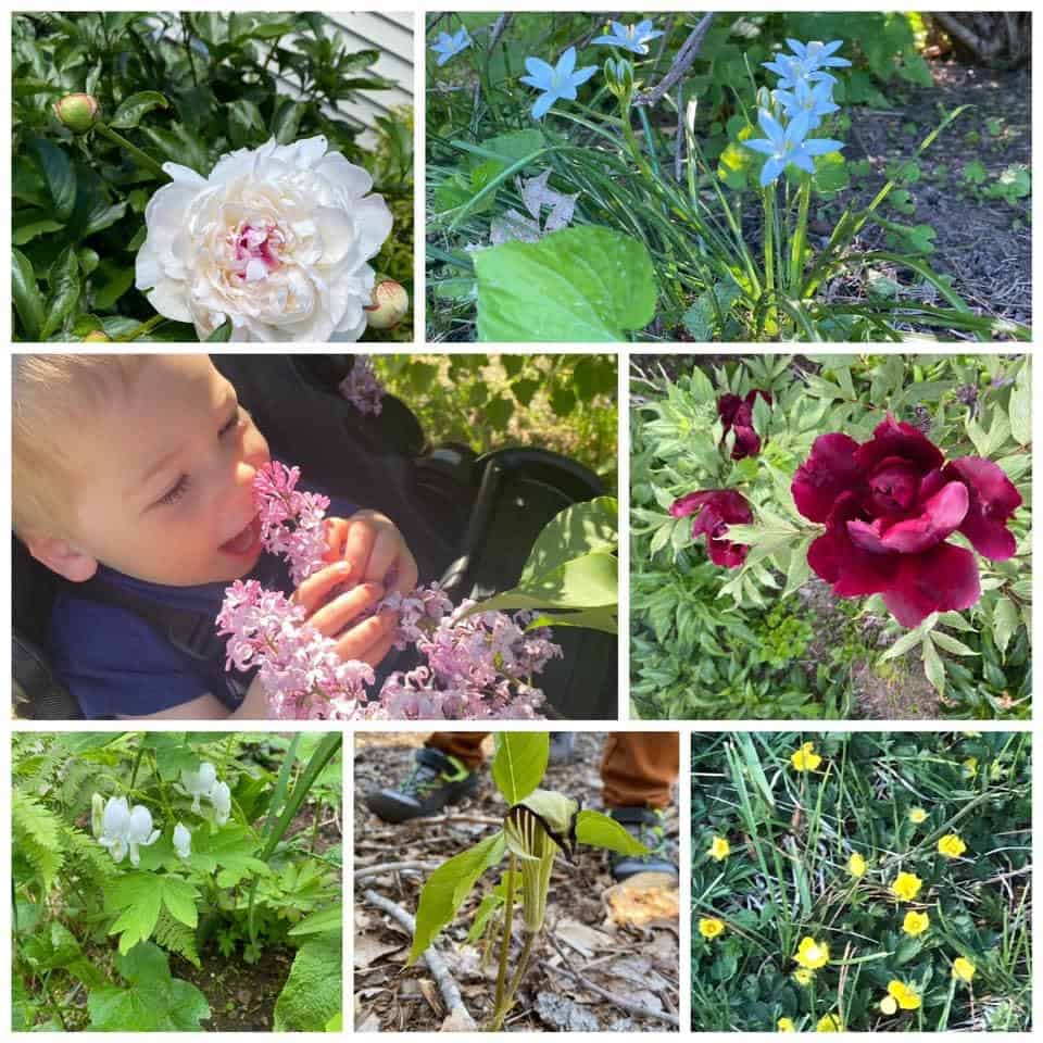 Fulltime Families Explorers Know About Plants - Fulltime Families